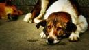 НКН. Бродячая собака - больше не друг человека?