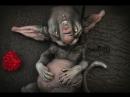 Инопланетный котенок кошачья раса Sevillsia