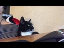 Cat Refuses to Take Paw Off Desk 1020561