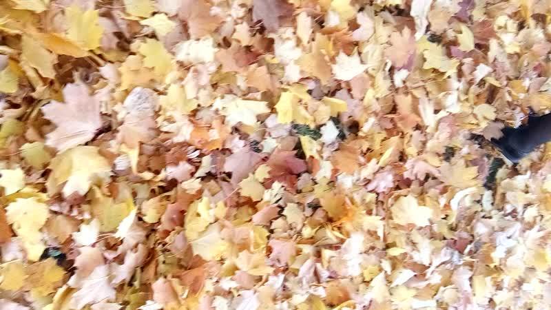 Первые листья