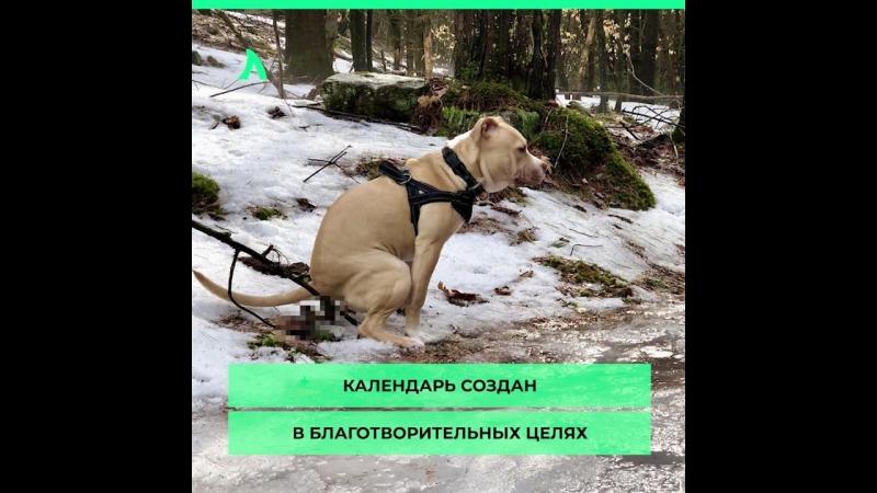 Дерьмовый календарь с собаками | АКУЛА