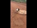 Vídeo mostrando resgate de cadela e filhotes amarrados dentro de saco em MG vira