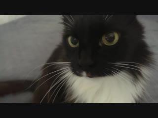 Коучинг кота