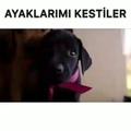 kato_jan video
