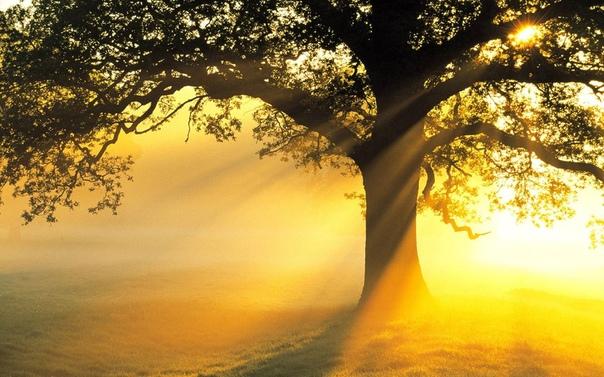 чудесное дерево есть у меня.⠀ оно мне — семья,⠀ и оно мне — родня.⠀ на дереве этом⠀ до старческих лет⠀ гнездился мой прадед,⠀ а также мой дед.⠀ мой папа.⠀ на нем научилась взлетать⠀ могла