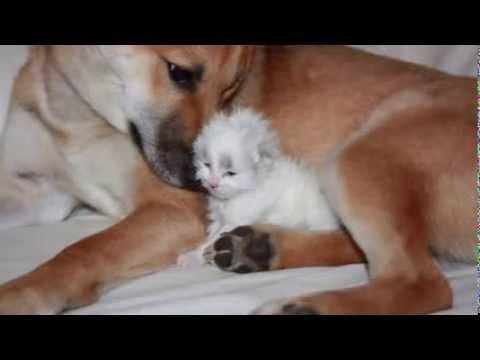 L'histoire entre un chaton et un chien
