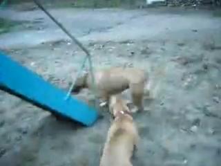 Моё видео. Мегги,Торнадо и друг Барс!Катаемся на горке!)))