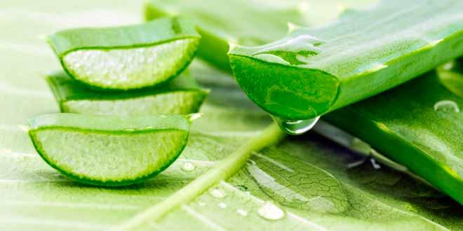 Какие бывают травы от псориаза?