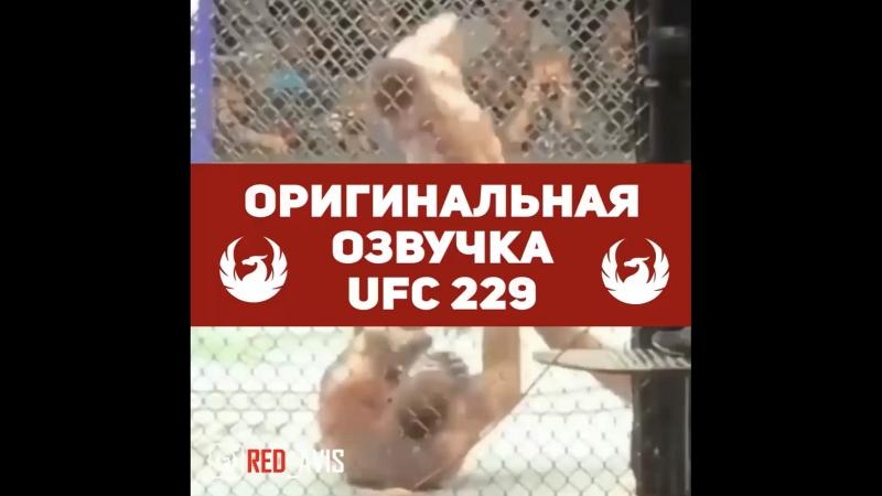 Всё что осталось за кадром UFC229 ОРИГИНАЛЬНАЯ ОЗВУЧКА MMAMEMES