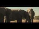 Спрятались в слоне
