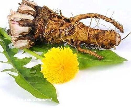 в 100 раз эффективнее химиотерапии: трава, которая убивает раковые клетки в течение 48 часов чай одуванчика действительно способен разрушить раковые клетки в течение 48 часов и защитить здоровые клетки от рака.эта трава имеет множество лечебных