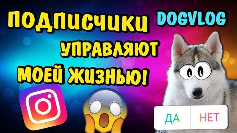 ПОДПИСЧИКИ УПРАВЛЯЮТ МОЕЙ ЖИЗНЬЮ! Говорящая собака