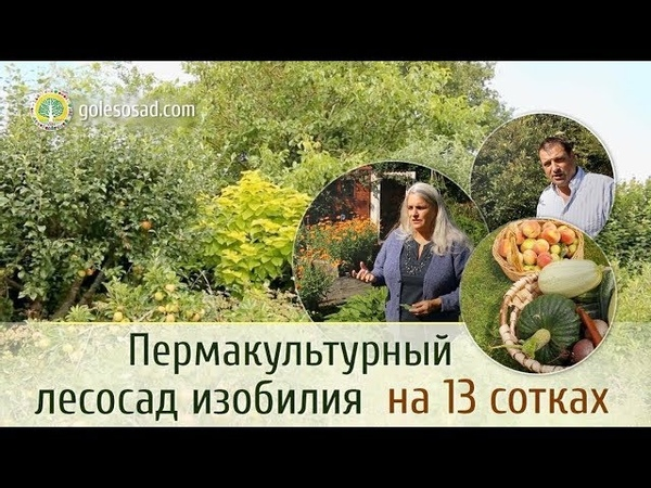 Пермакультурный лесосад изобилия на 13 сотках!