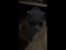 В моего кота вселился бес