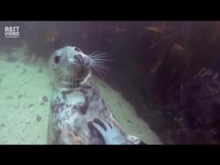 Вот почему их называют морские котики