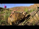The Journey into wild Iran -- ای ایران ای مرز پر گوهر