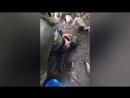 Спасатели откачали котёнка