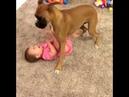 Всем известно, что собака - друг человека. А маленького - тем более!