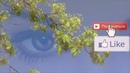 песня сказка В твоих глазах музыка и исполнение Олега Сапегина стихи Владимира Патрикеева Шуйского
