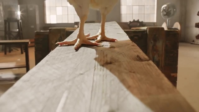 острые крылья наутилуса · coub, коуб