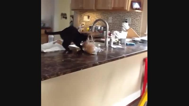 Котейки грабители
