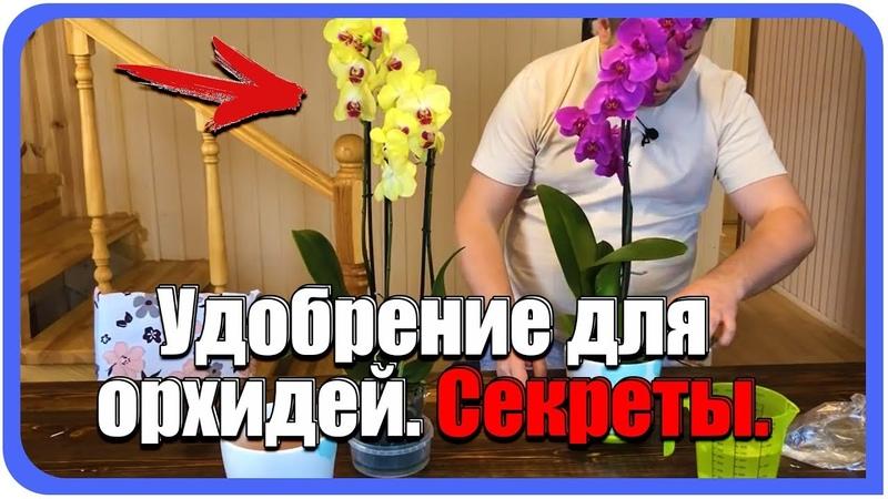 Удобрение для Орхидей. Чесночная настойкавода для цветения орхидей. Уход, полив, подкормка.