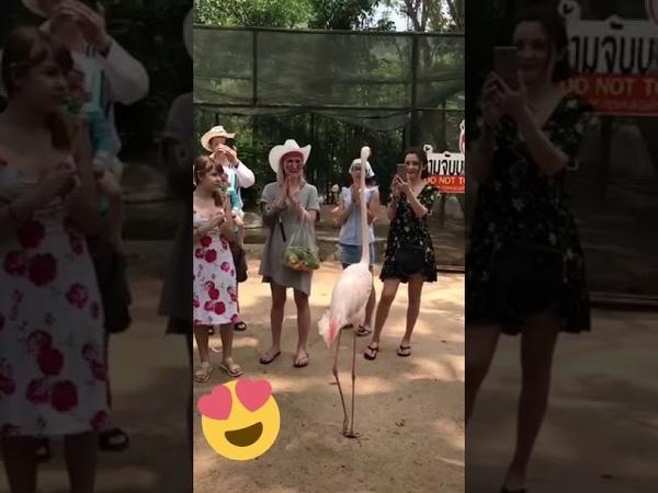 Танцует лезгинку розовый фламинго 😁👋👋👍🙌🙌