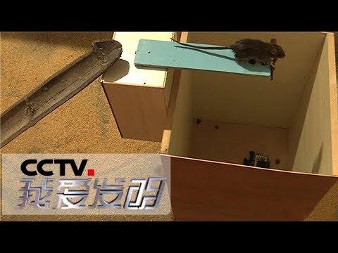 《我爱发明》 20180517 斗鼠3 栈桥式捕鼠器VS接洞式捕鼠器 | CCTV科教
