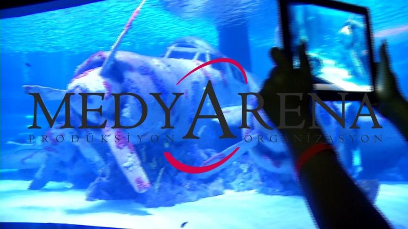 Akvarium tel 905316849544