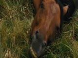 Боевая лошадь Вангелис Завоевание рая