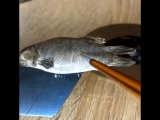 Рыбка сушёная