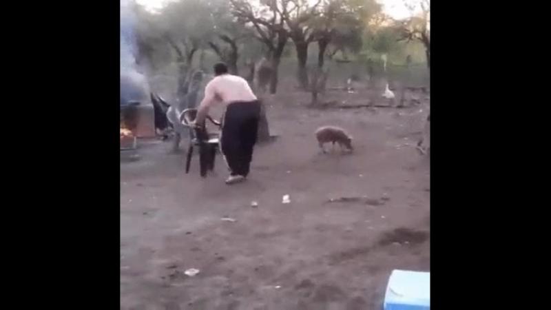 Règle numéro Une : Ne pas emmerde les petits porcinets russes