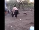 Règle numéro Une Ne pas emmerde les petits porcinets russes
