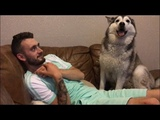 Its impossible to ignore Millie the husky! All she wants is love!