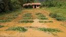 Primitive technology: Farmland, Fertilizer (How to make organic fertilizer) Part 3