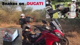 Carrying Snakes on a Ducati Multistrada