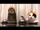Вирусное видео про кошек