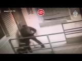 Пёс спас хозяйку в Ростове-на-Дону
