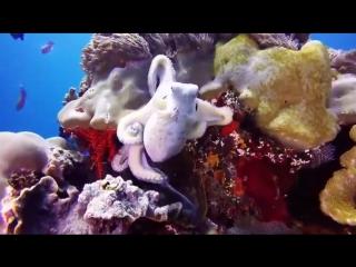 Kygo ft. Avicii│PARADISE - Nadro ft. Timmy Commerford  Jaytee [Music Video 2018