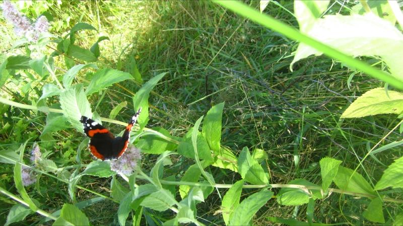 На крыльях бабочки улетает лето