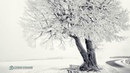 ॐ Аджан Брахм — Глава 1. Осознанность, блаженство и за их пределами. Аудиокнига, Nikosho