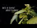 Мотивация взято из видео Alina Solopova