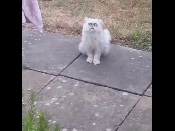 "A crazy looking cat at his mom's house!"" 🐱😳😂"