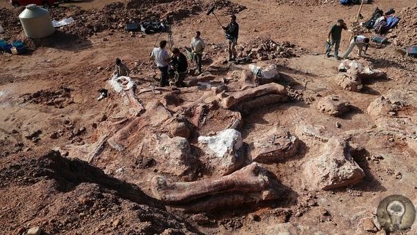 Динозавры  ровесники человека