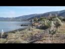 В Греции на побережье обрушился паукопокалипсис — весь берег окутало паутиной  Выглядит, как иллюстрация книг Стивена Кинга