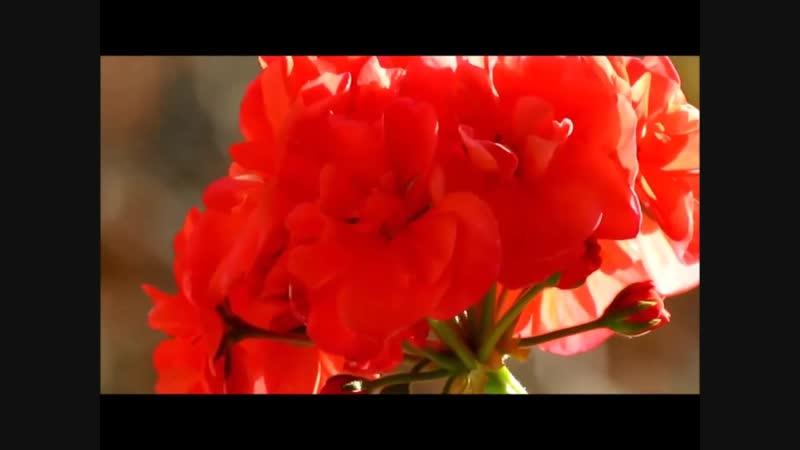 Цветы на подоконнике для Н.Дияовой,Н.Ульянкиной,в связи с 25 летием М.К.Ц.