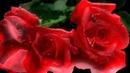 Semino Rossi Frag - nicht wohin die Liebe geht