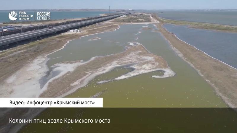Махнув крылом Крымский мост с высоты птичьего полета