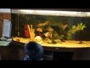 Рыбка просится на волю...