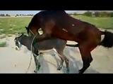 Horse mating compilation | 馬交配 | parenje konja | 馬の交尾 | acasalamento de cavalos | спаривание лошадей